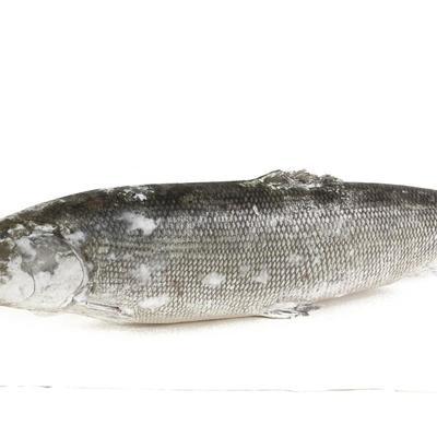Seafood - доставка морепродуктов, морских деликатесов и рыбы в Обнинске, Москве: Нельма свежемороженная (3-4 кг)