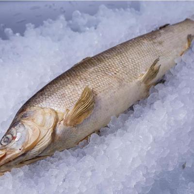 Seafood - доставка морепродуктов, морских деликатесов и рыбы в Обнинске, Москве: Омуль свежемороженный (0.8-1.5 кг)