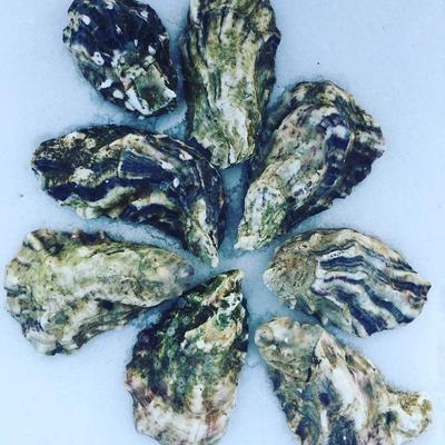 Seafood Обнинск: Живые устрицы